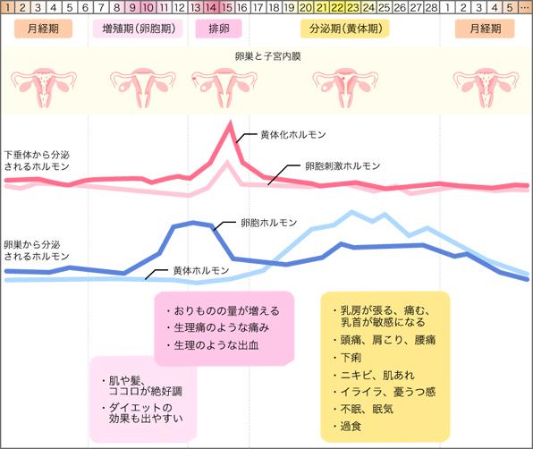 乳首 排卵日